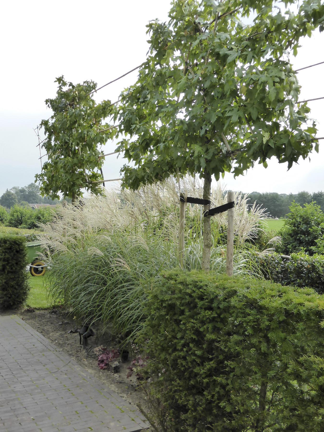 Reggy Horsthuis strakke tuin nieuwbouw